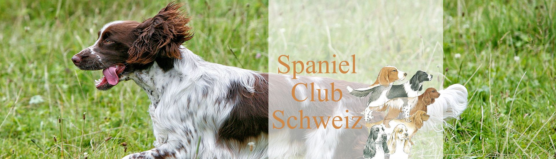 Spaniel Club Der Schweiz Jagd
